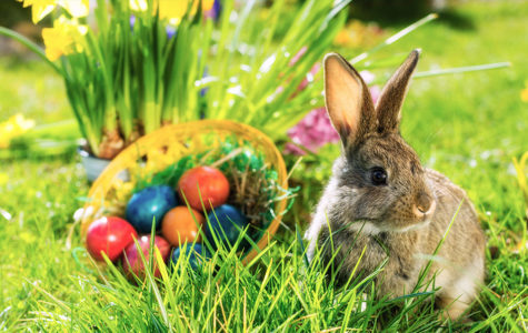 Egg hunts and bunnies are just two symbols of the joy of Spring.