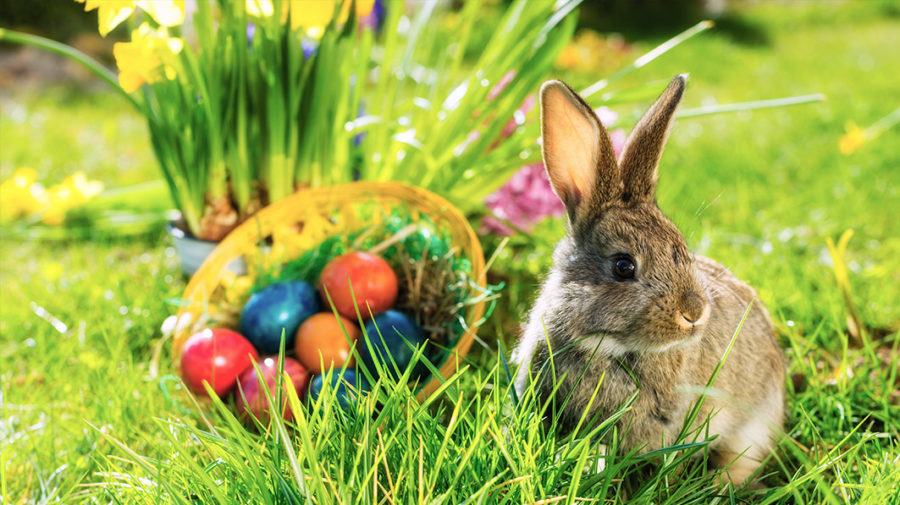 Egg+hunts+and+bunnies+are+just+two+symbols+of+the+joy+of+Spring.